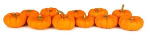 long-pumpkin-border-autumn-mini-pumpkins-forming-over-white-background-45053604